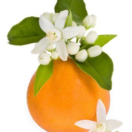 Pomaranč, pomarančový kvet