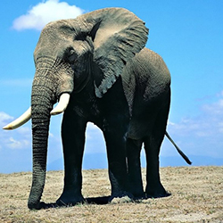 Slon - slony pre šťastie